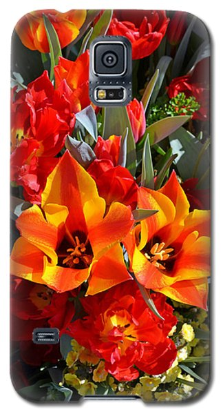 Tulips At The Pier Galaxy S5 Case