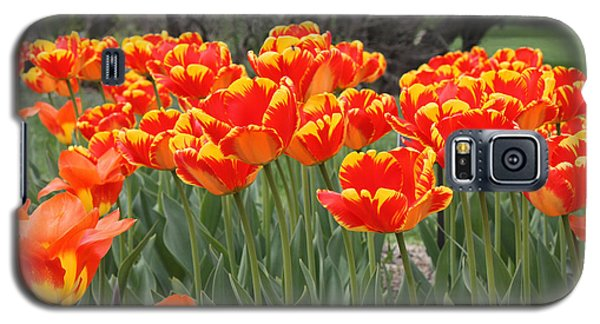 Galaxy S5 Case featuring the photograph Tulips From Brooklyn by John Telfer