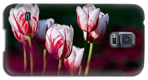 Galaxy S5 Case featuring the photograph Tulips Garden Flowers Color Spring Nature by Paul Fearn