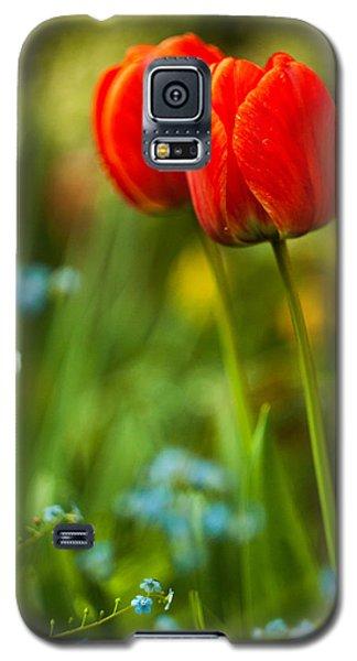 Tulips In Garden Galaxy S5 Case