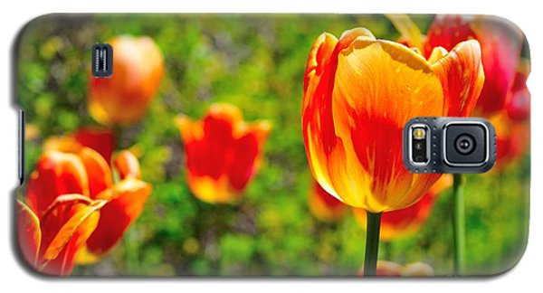 Galaxy S5 Case featuring the photograph Tulips by Joe  Ng