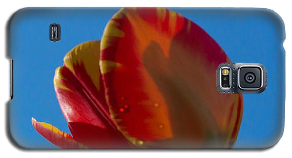 Tulips On Blue Galaxy S5 Case