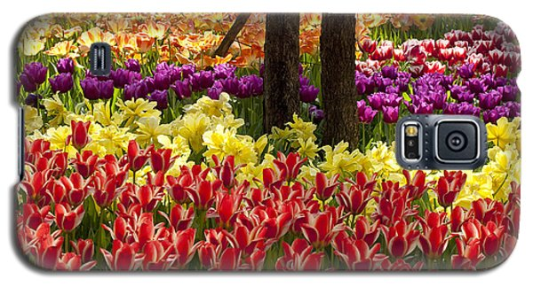 Tulips Tulips Tulips Galaxy S5 Case by Robert Camp