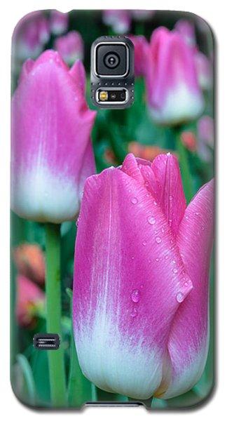Tulips-tulips-tulips Galaxy S5 Case
