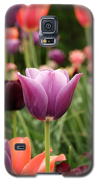 Tulips Welcome Spring Galaxy S5 Case