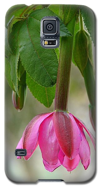 Galaxy S5 Case featuring the photograph Tumbo Blossom by Lew Davis