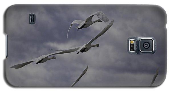 Tundra Swans Taking Flight 1 Galaxy S5 Case