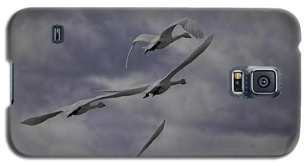 Tundra Swans Taking Flight 1 Galaxy S5 Case
