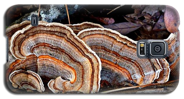 Galaxy S5 Case featuring the photograph Turkey Tail Fungi In Autumn by William Tanneberger