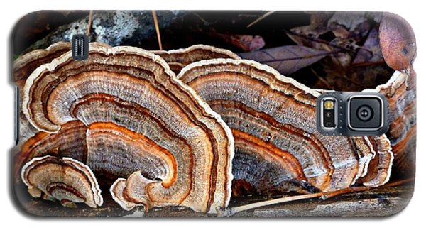 Turkey Tail Fungi In Autumn Galaxy S5 Case