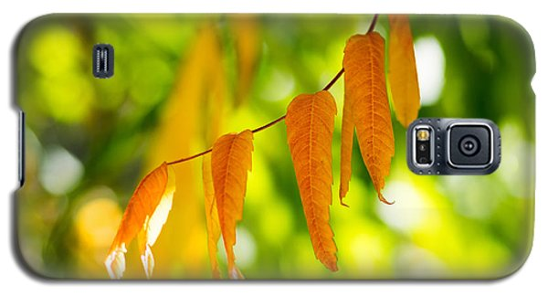 Turning Autumn Galaxy S5 Case by Aaron Aldrich