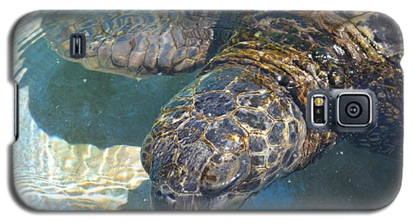 Turtle Galaxy S5 Case