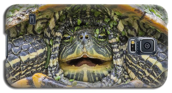 Turtle Covered With Duckweed Galaxy S5 Case
