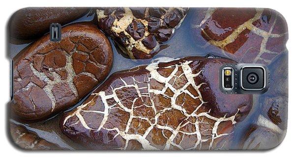 Turtle Or Stone Galaxy S5 Case by Kathi Mirto