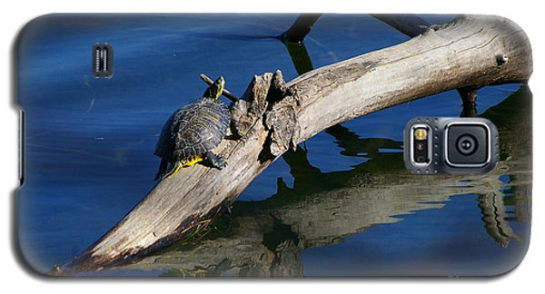 Galaxy S5 Case featuring the photograph Turtle Sun by Tannis  Baldwin