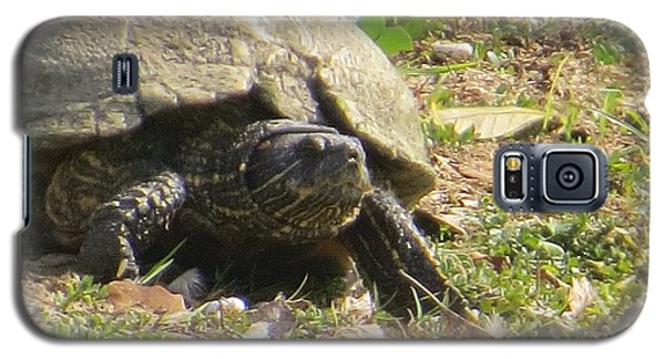 Galaxy S5 Case featuring the photograph Turtle Up Close by Ella Kaye Dickey