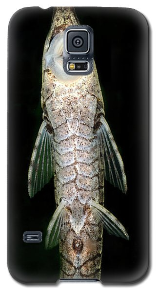 Twig Catfish Or Stick Catfish Galaxy S5 Case by Nigel Downer