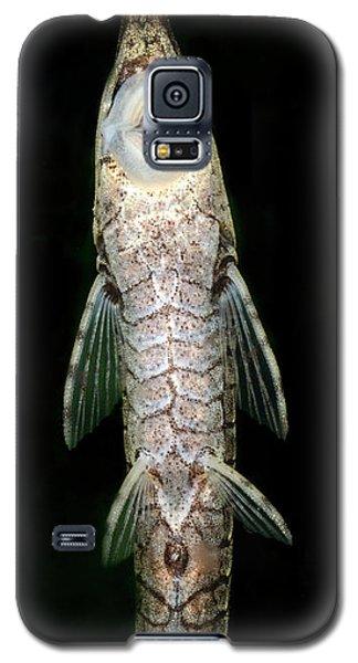 Catfish Galaxy S5 Case - Twig Catfish Or Stick Catfish by Nigel Downer