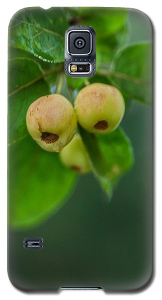 Twin Berries Galaxy S5 Case
