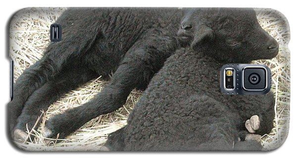 Twin Black Lambs Galaxy S5 Case by Cathy Long