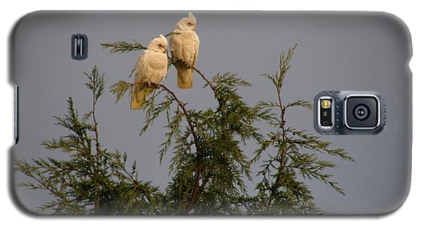 Twin Cockatoos Galaxy S5 Case