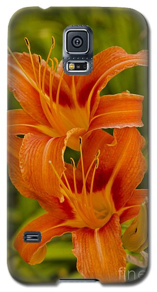 Twin Orange Trumpet Lilies Galaxy S5 Case by MaryJane Armstrong