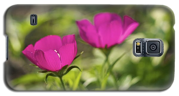 Galaxy S5 Case featuring the photograph Twin Poppies - Poppy Mallow Art Print by Jane Eleanor Nicholas