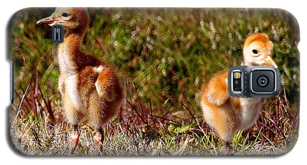 Galaxy S5 Case featuring the photograph Twin Sandhill Chicks 000  by Chris Mercer