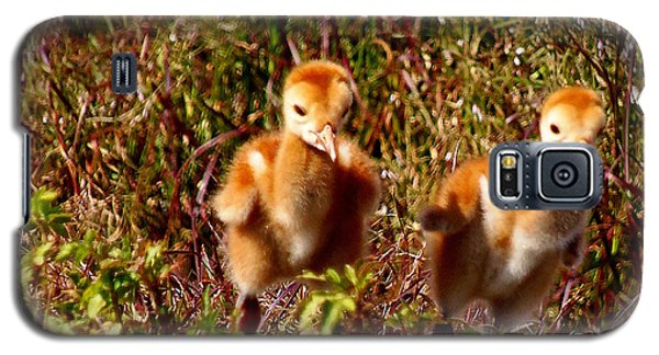 Galaxy S5 Case featuring the photograph Twin Sandhill Chicks by Chris Mercer