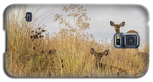 Twin Yearlings Galaxy S5 Case by Randy Wood