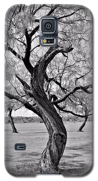 Twisted Tree Galaxy S5 Case by Elizabeth Budd