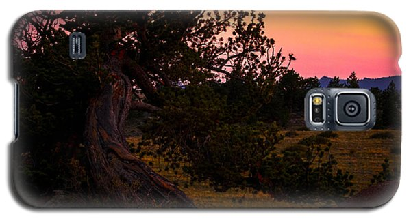 Twisted Tree In Sunset Galaxy S5 Case