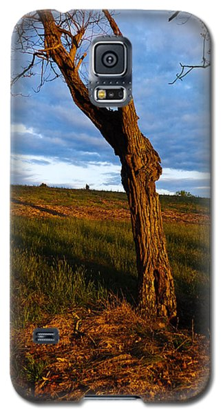 Twisted Tree Galaxy S5 Case