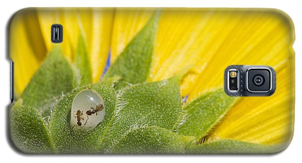 Two Ants Entombed In Sunflower Resin Galaxy S5 Case