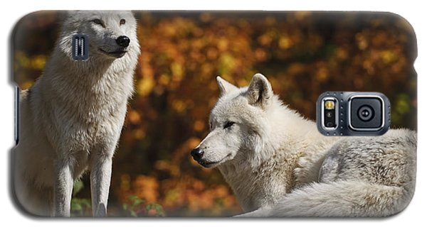 Galaxy S5 Case featuring the photograph Two Arctic Wolves On Rock Hill by Wolves Only