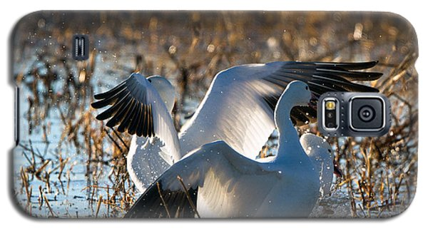 Two Backlit Snow Geese Galaxy S5 Case
