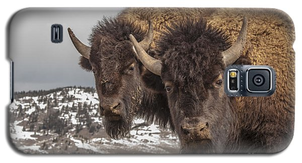 Two Bison Galaxy S5 Case