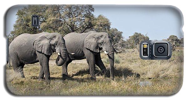 Two Bull African Elephants - Okavango Delta Galaxy S5 Case by Liz Leyden