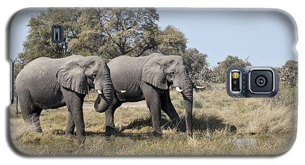 Two Bull African Elephants - Okavango Delta Galaxy S5 Case