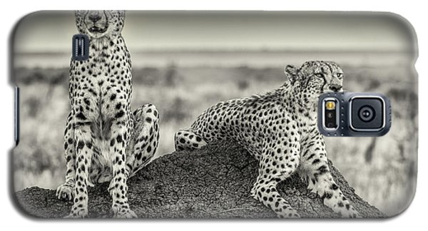 Cheetah Galaxy S5 Case - Two Cheetahs Watching Out by Henrike Scheid