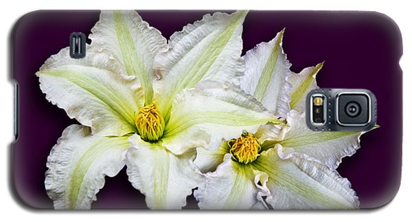 Two Clematis Flowers On Purple Galaxy S5 Case by Jane McIlroy