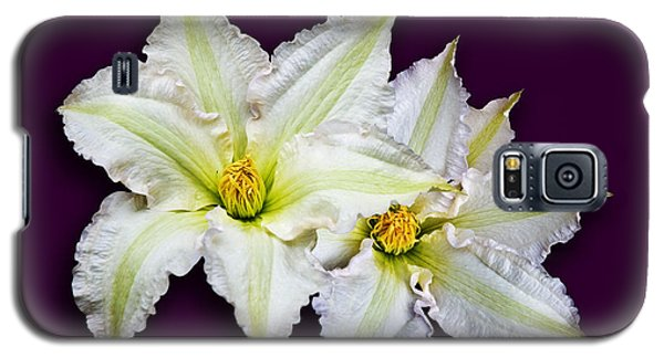 Two Clematis Flowers On Purple Galaxy S5 Case