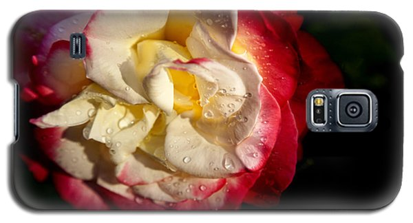 Two Color Rose Galaxy S5 Case by David Millenheft