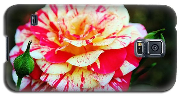 Two Colored Rose Galaxy S5 Case by Cynthia Guinn