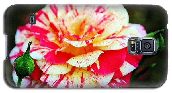 Two Colored Rose Galaxy S5 Case