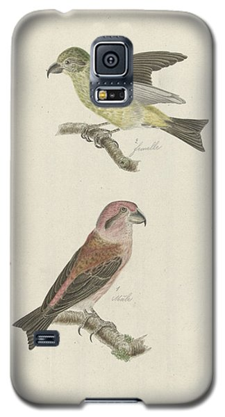 Two Crossbills, Possibly Christiaan Sepp Galaxy S5 Case