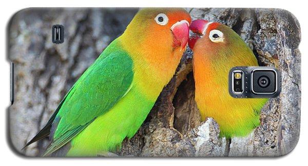 Lovebird Galaxy S5 Case - Two Fischer's Lovebirds (agapornis by James Heupel