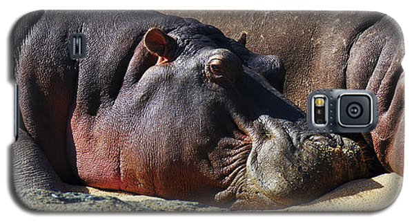 Two Hippos Sleeping On Riverbank Galaxy S5 Case by Johan Swanepoel
