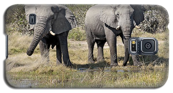 Galaxy S5 Case featuring the photograph Two Male Elephants Okavango Delta by Liz Leyden