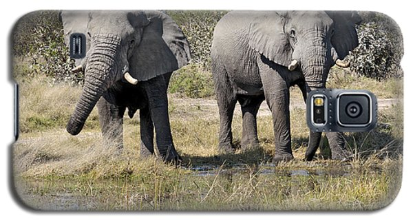 Two Male Elephants Okavango Delta Galaxy S5 Case